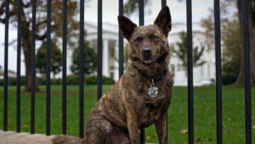 Pies prezydenta
